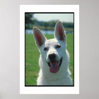 White German Shepherd Dog Poster