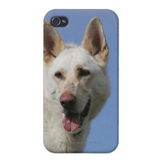 White German Shepherd iPhone 4 Cover