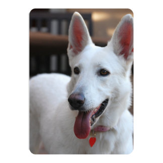 white german shepherd.png card