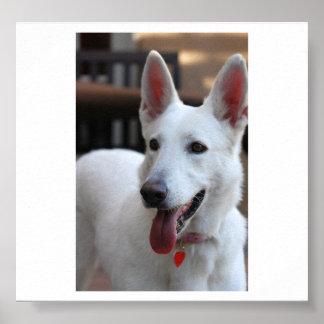 white german shepherd.png poster