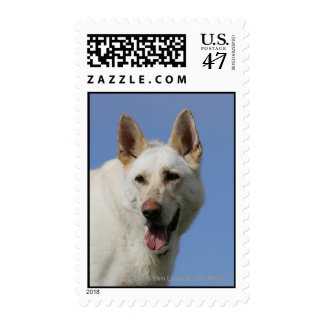 White German Shepherd Postage
