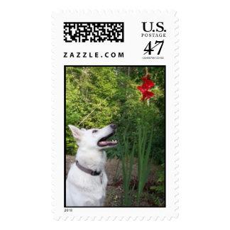 White German Shepherd postage stamp
