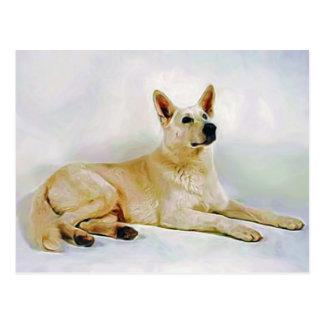 White German Shepherd Postcard