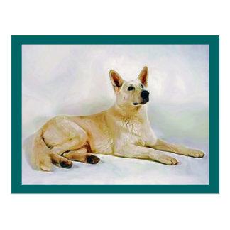 White German Shepherd Post Cards