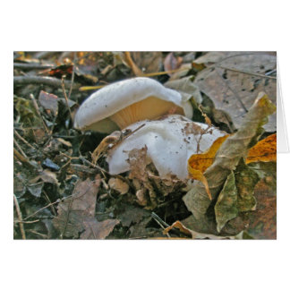 White Gilled Mushrooms Note Card
