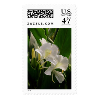White Ginger Postage Stamp