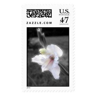 White Gladioli Postage