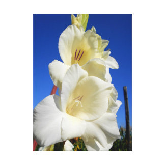 White Gladiolus And The Blue Sky Canvas Print