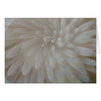 White Glass Mum Flower Greeting Card