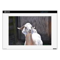 White goat 15