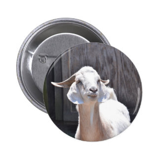 White goat buttons