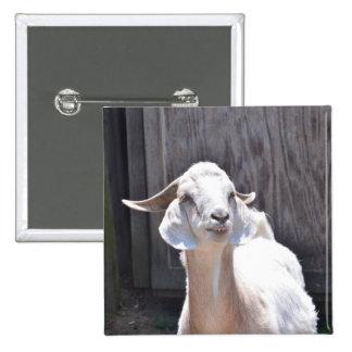 White goat pinback button