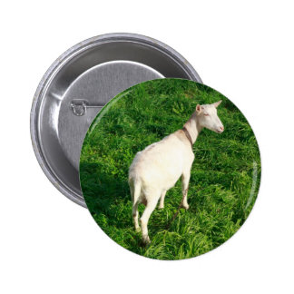 White goat pin