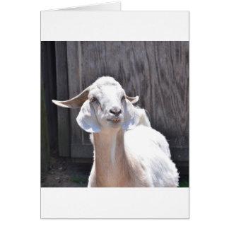 White goat cards
