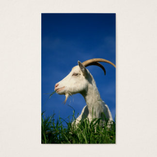 White goat grazing business card