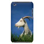 White goat grazing Case-Mate iPod touch case
