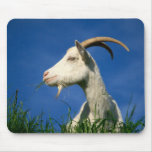White goat mouse pad