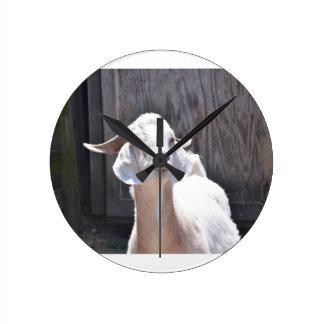 White goat round clocks