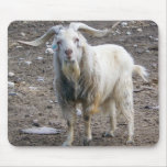 White Goat Standing Mouse Pads