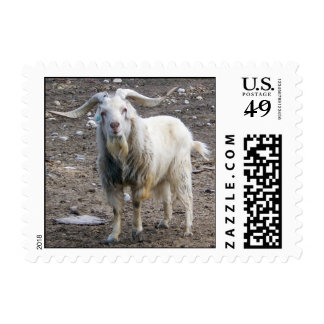 White Goat Standing Postage