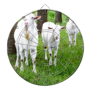 White goats on grass with tree trunks dartboard with darts