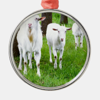 White goats on grass with tree trunks metal ornament