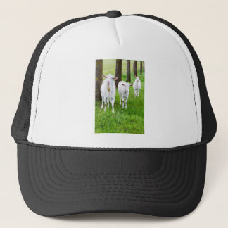White goats on grass with tree trunks trucker hat