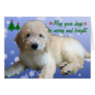 """White Golden Doodle Christmas"" Greeting Cards"