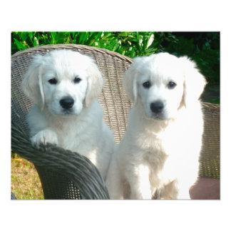 """White Golden Retriever Dogs Sitting in Fiber Chai 4.5"""" X 5.6"""" Flyer"""