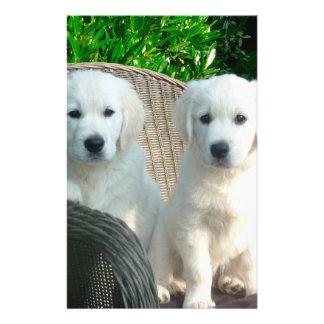 """White Golden Retriever Dogs Sitting in Fiber Chai 5.5"""" X 8.5"""" Flyer"""
