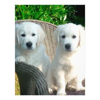 """White Golden Retriever Dogs Sitting in Fiber Chai 8.5"""" X 11"""" Flyer"""