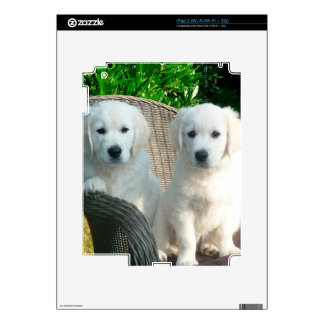 White Golden Retriever Dogs Sitting in Fiber Chai iPad 2 Decals