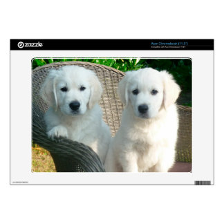 White Golden Retriever Dogs Sitting in Fiber Chai Acer Chromebook Decal