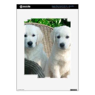 White Golden Retriever Dogs Sitting in Fiber Chai Skins For iPad 3