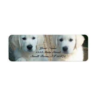White Golden Retriever Dogs Sitting in Fiber Chair Label