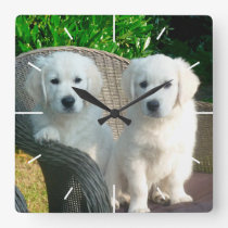 White Golden Retriever Dogs Sitting in Fiber Chair Square Wall Clock
