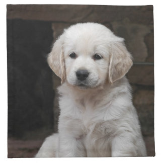 White golden retriever puppy Puppy Napkin