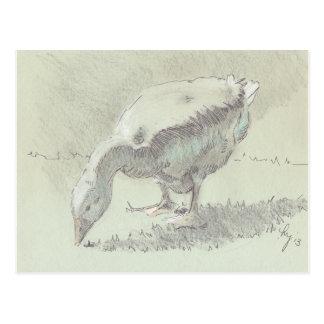 White Goose drawing Postcard