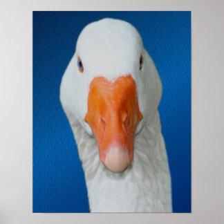 White Goose Face Farm Animal Poster