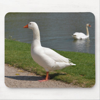 White goose near of pond mouse pad