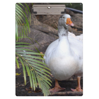 White Goose standing near fronds Clipboard