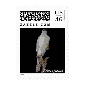White Goshawk stamp