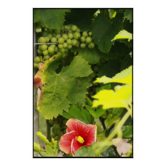 White Grapes & Flora Poster