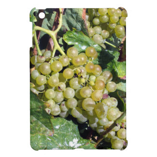 White grapes in a vineyard cover for the iPad mini