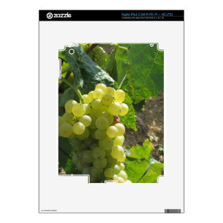 White grapes in a vineyard decal for iPad 3