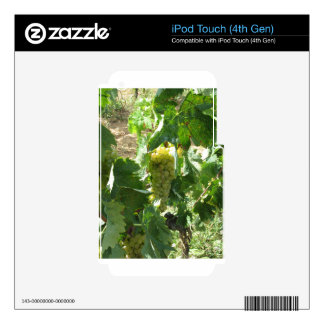 White grapes in a vineyard decal for iPod touch 4G