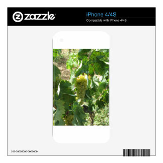 White grapes in a vineyard decal for the iPhone 4S