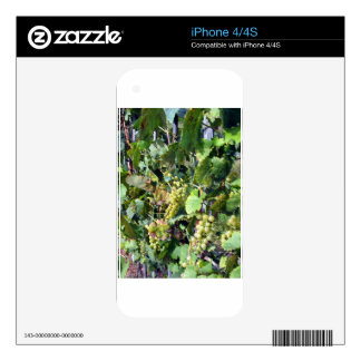 White grapes in a vineyard decals for iPhone 4