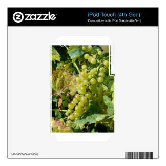 White grapes in a vineyard decals for iPod touch 4G