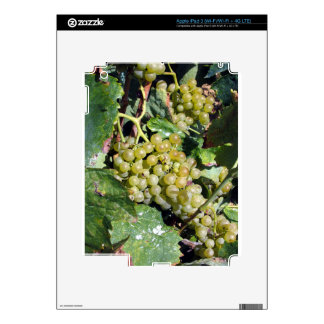 White grapes in a vineyard iPad 3 decal